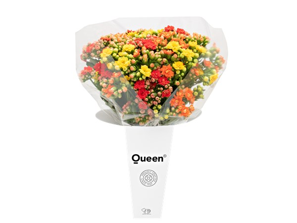 Queen® Luksusbuket, rød/gul/orange